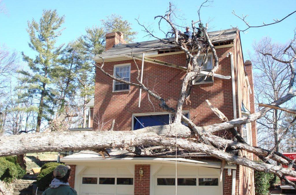 Branch Residence